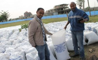 Amenti Chali, LIVEs Regional Expert and Kassa Getu, Managing Director of KDG & Family with sacks of seedling growth medium (Photo: Desalegne Tadesse (IWMI))